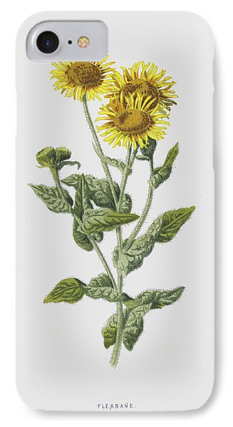 Fleabane IPhone Case by Frederick Edward Hulme