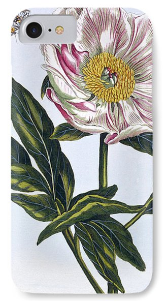 Flesh Colored Common Peony IPhone Case by Pierre-Joseph Buchoz