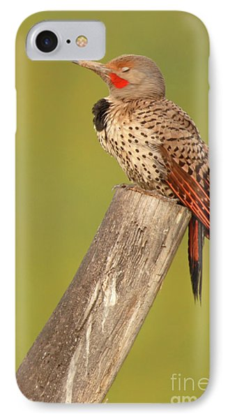 IPhone Case featuring the photograph Flicker Asleep On Perch by Max Allen