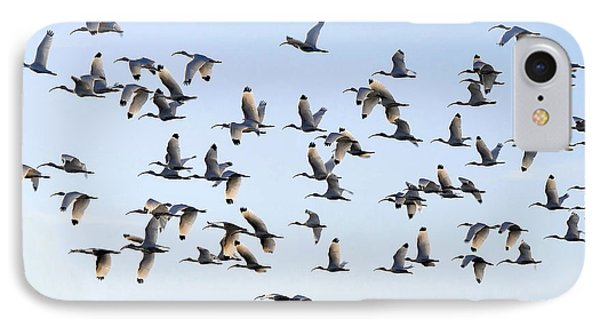 Flight Of The White Ibis Phone Case by David Lee Thompson