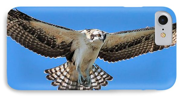 IPhone Case featuring the photograph Flight Practice Over The Nest by Debbie Stahre