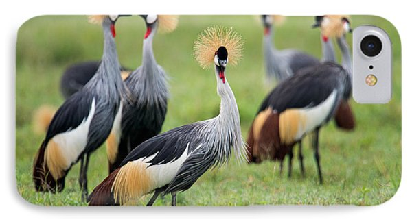 Flock Of Grey Crowned Cranes Balearica IPhone Case