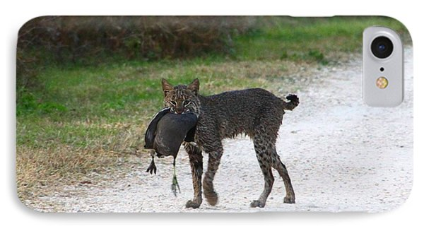 Florida Bobcat Catches An Evening Snack IPhone Case