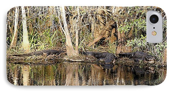 IPhone Case featuring the photograph Florida Gators - Everglades Swamp by Jerry Battle