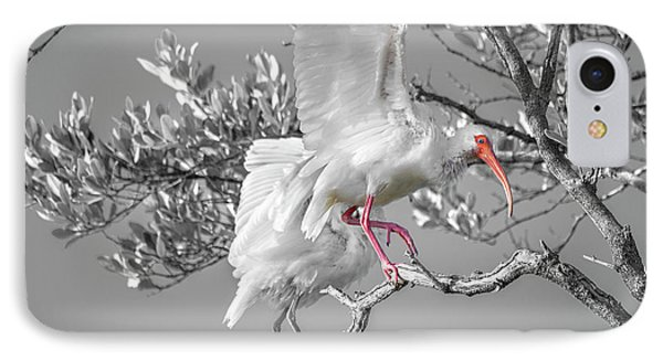 Ibis iPhone 7 Case - Florida Keys White Ibis by Betsy Knapp