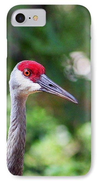 Florida Sandhill Crane Portrait IPhone Case by Sabrina K Wheeler