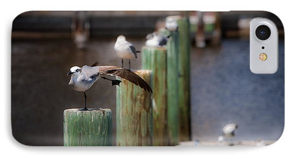 IPhone Case featuring the photograph Florida Seagull Playing by Jason Moynihan