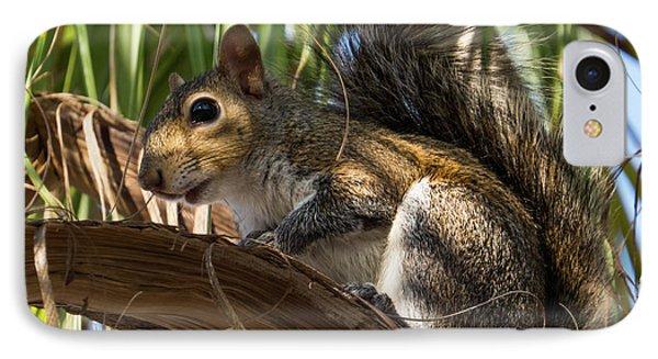 Florida Squirrel IPhone Case