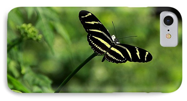 Florida State Butterfly IPhone Case by Greg Allore