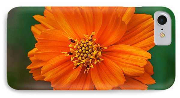 Flower Color IPhone Case by Edward Peterson