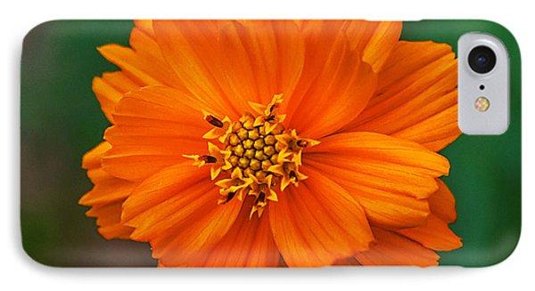 Flower Color IPhone Case