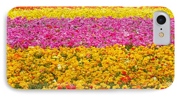 Flower Fields Carlsbad Ca Giant Ranunculus Phone Case by Christine Till