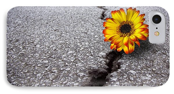 Flower In Asphalt IPhone Case by Carlos Caetano