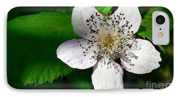 IPhone Case featuring the photograph Flower In Shadow by Larry Keahey