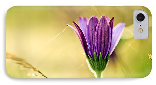 Flower On Summer Meadow IPhone Case by Nailia Schwarz