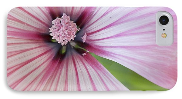 IPhone Case featuring the photograph Flower Star by Elvira Butler