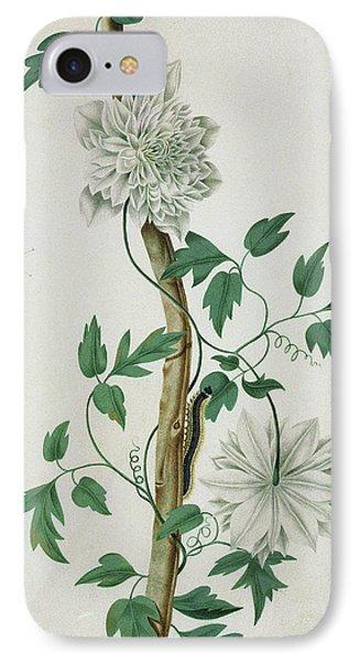 Flower Studies, 18th Century IPhone Case