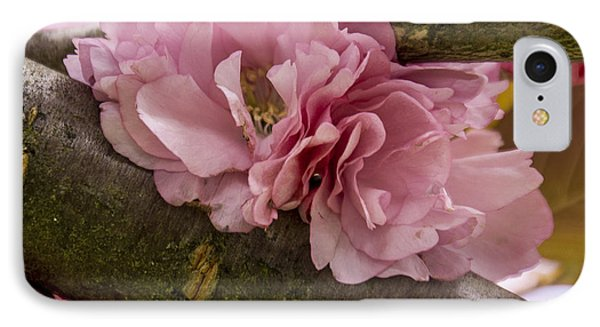 Flowering Almond I IPhone Case