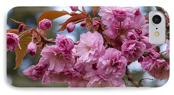 Flowering Almond II IPhone Case