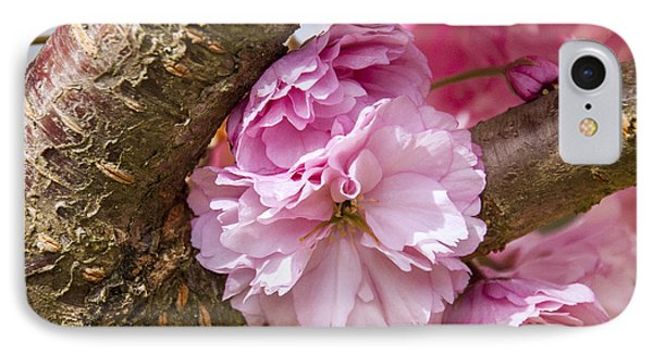 Flowering Almond IIi IPhone Case