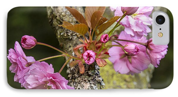 Flowering Almond V IPhone Case