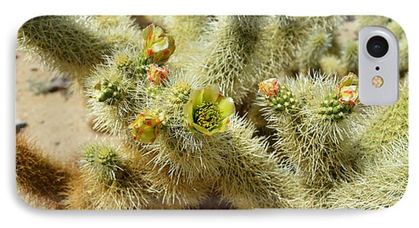 Flowering Cholla Cactus - Joshua Tree National Park IPhone Case by Glenn McCarthy