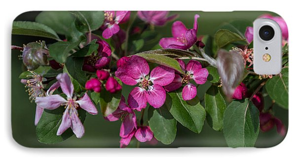 Flowering Crabapple IPhone Case by John Roberts