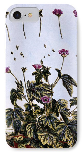 Flowering Maple Or Indian Mallow IPhone Case by Pierre-Joseph Buchoz
