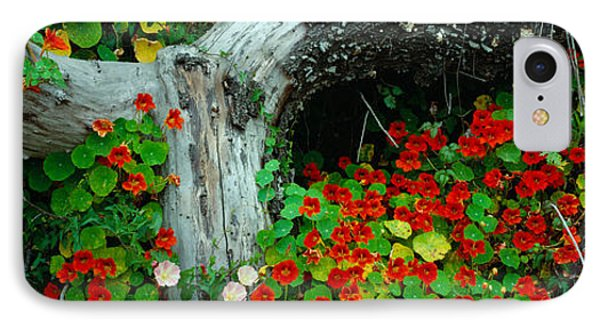 Flowers And Log, Route 1, Northern IPhone Case by Panoramic Images