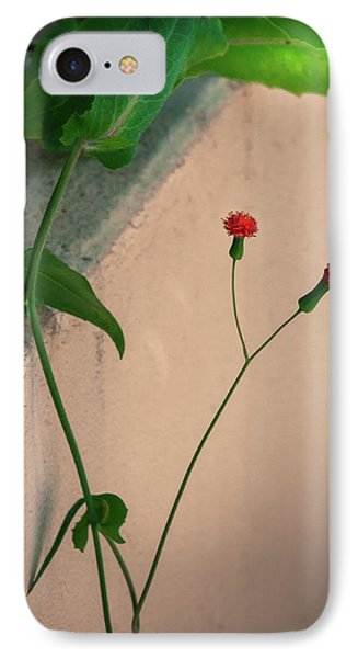 Flowers, Leaves And Wall IPhone Case by Frank Mari