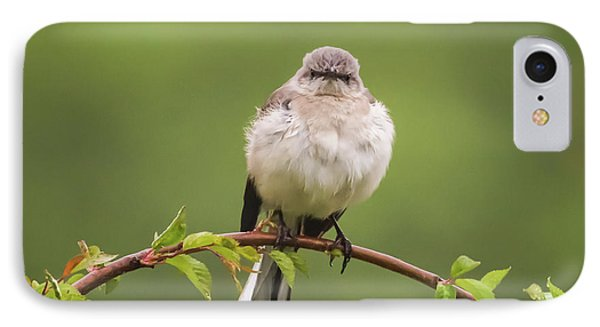 Fluffy Mockingbird IPhone Case by Terry DeLuco