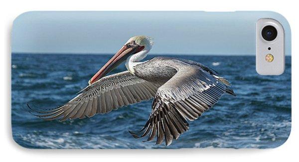 Flying Brown Pelican IPhone Case by Robert Bales