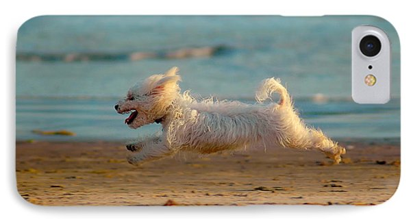 Flying Dog IPhone Case by Harry Spitz