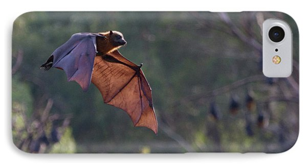 Flying Fox In Mid Air IPhone Case by Craig Dingle