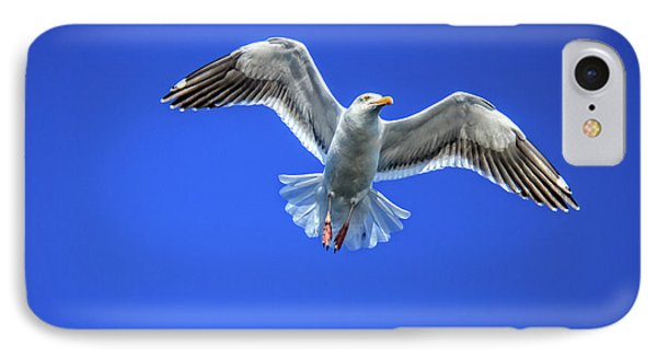 Flying Gull IPhone Case by Robert Bales