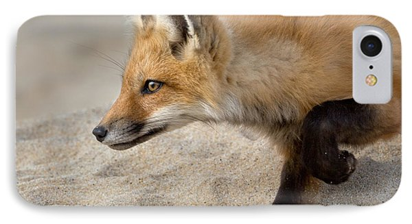 Focused Fox IPhone Case by Bill Wakeley