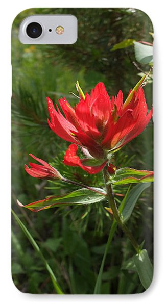 IPhone Case featuring the photograph Foothills Paintbrush by Scott Kingery