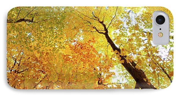 Forest Fall Yellow  IPhone Case
