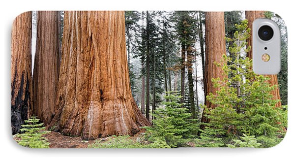IPhone Case featuring the photograph Forest Growth by Peggy Hughes
