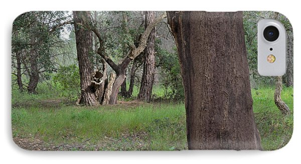 Forest Of Cork Oak Trees IPhone Case by Angelo DeVal