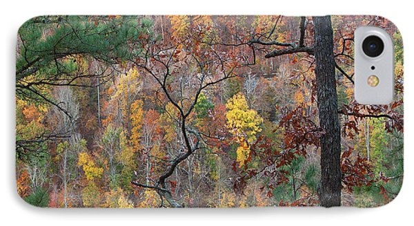 Forest IPhone Case by Tim Fitzharris
