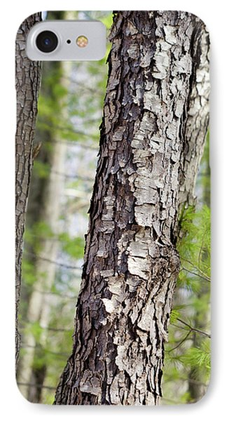 IPhone Case featuring the photograph Forest Trees by Christina Rollo