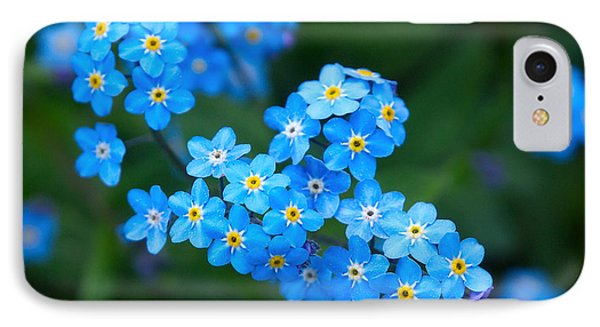 Forget -me-not 5 IPhone Case by Jouko Lehto