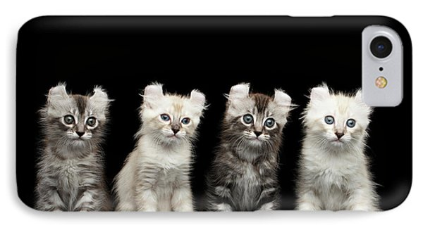Four American Curl Kittens With Twisted Ears Isolated Black Background IPhone Case by Sergey Taran