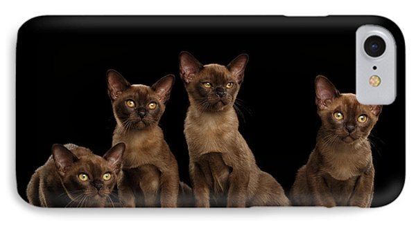 Four Cute Burma Kittens Sitting, Isolated Black Background IPhone Case