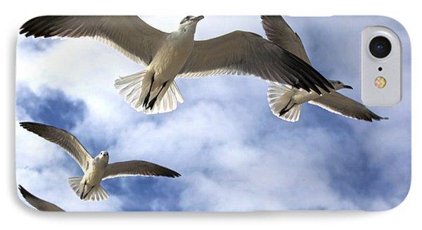 Four Gulls IPhone Case by Robert Och