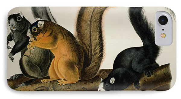 Fox Squirrel IPhone Case by John James Audubon