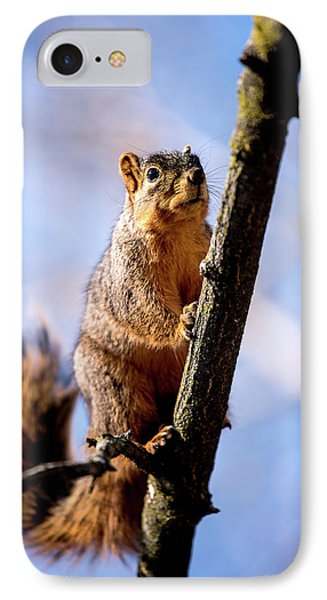 Fox Squirrel's Last Look IPhone Case by Onyonet  Photo Studios