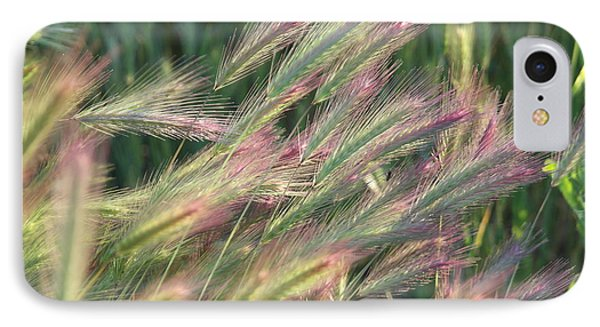 Foxtails In Spring IPhone Case by Michele Myers
