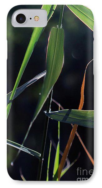 IPhone Case featuring the photograph Fragment by Linda Lees